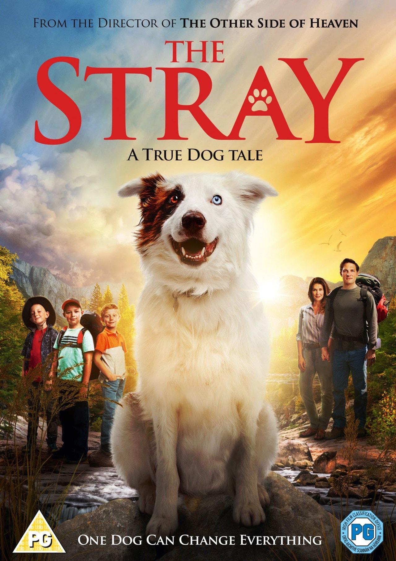 The Stray - 1