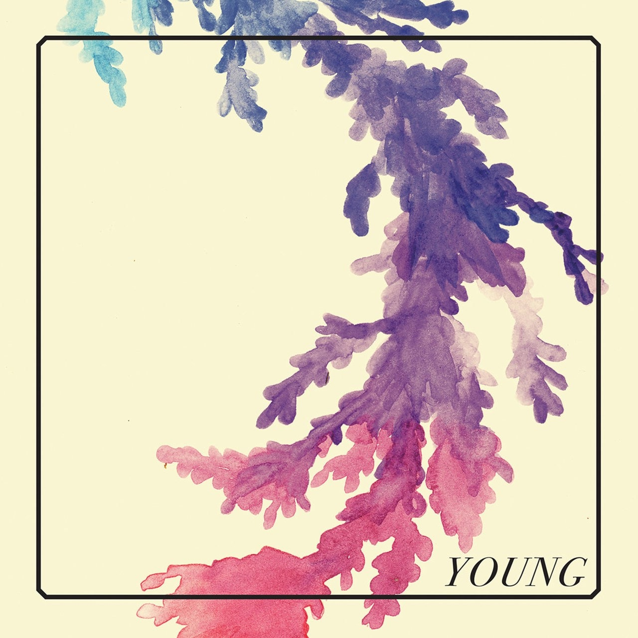 Young - 1