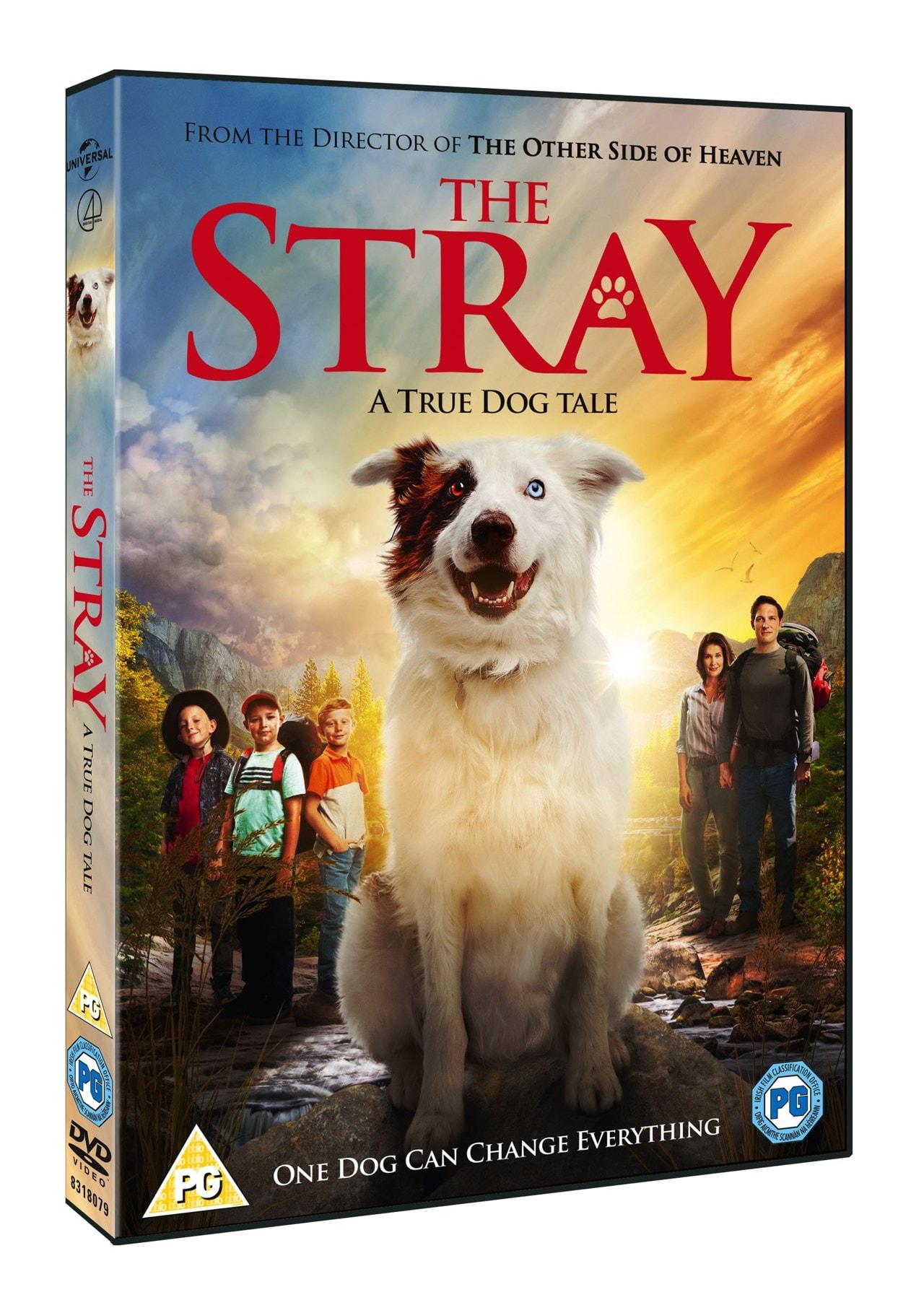 The Stray - 2