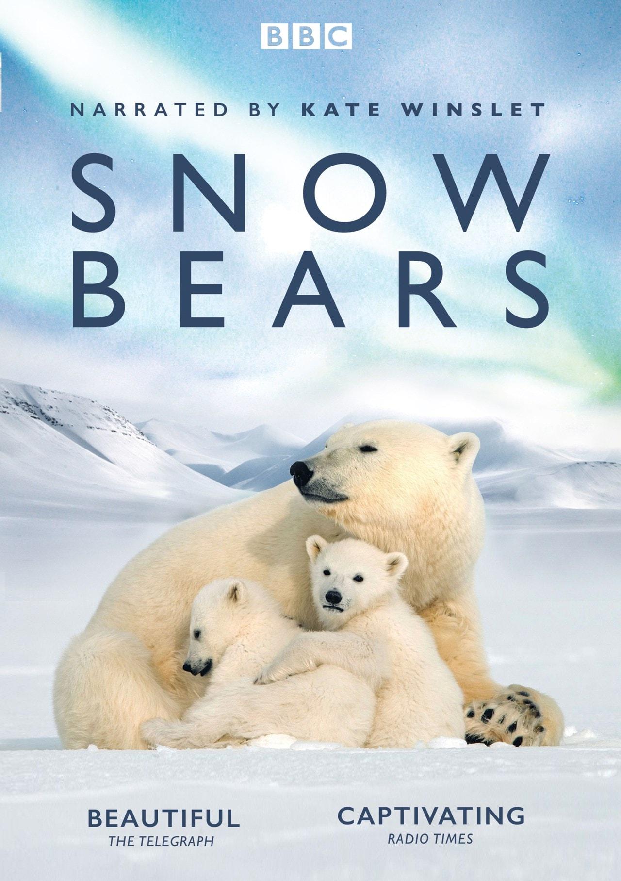 Snow Bears - 1