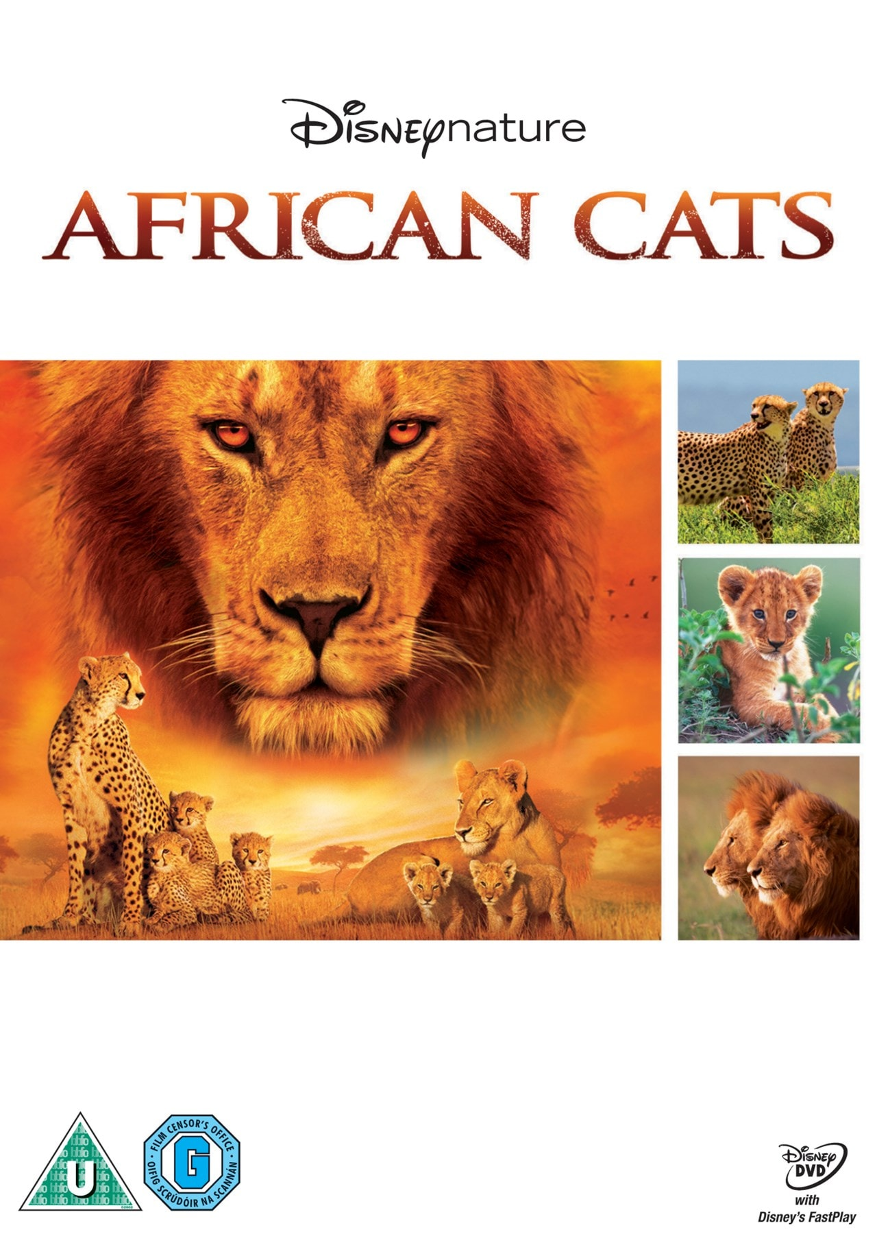 African Cats - 1