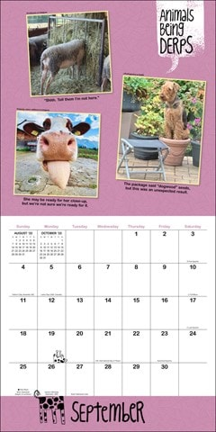 Animals Being Derps Square 2022 Calendar - 2