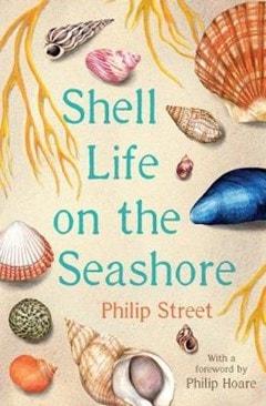 Shell Life On The Seashore - 1